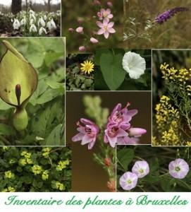 Inventaire plantes à Bxl