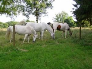 silex chevaux
