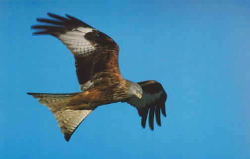 Photo: Wim Smeets, Calendrier de l'oiseau, 2004.