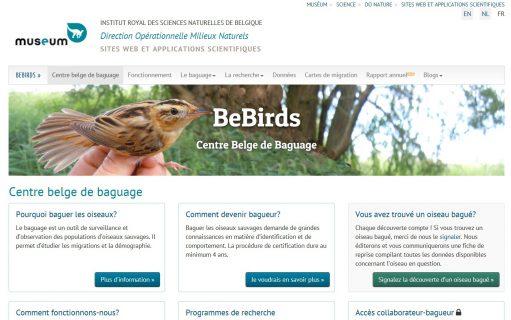 portail bebirds
