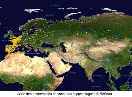 Carte observations vanneaux huppés_BeBirds